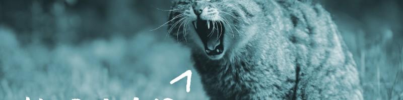 Das große Gähnen: Corporate-Blogs